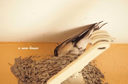 つばめさん巣作り2020②.jpg
