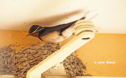 つばめさん巣作り2020.jpg