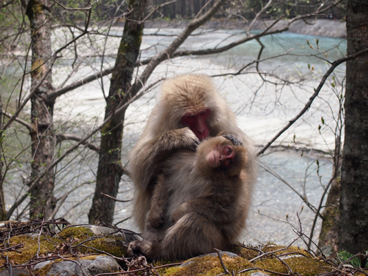 上高地お猿さん.jpg