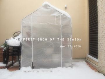 初雪2016.jpg