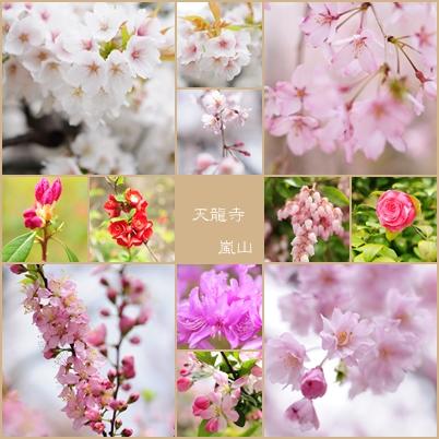 天龍寺のさくらとお花.jpg