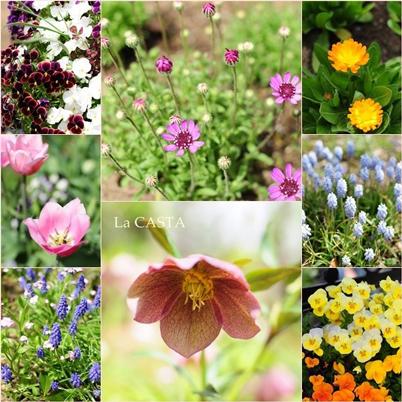 庭園のお花1.jpg