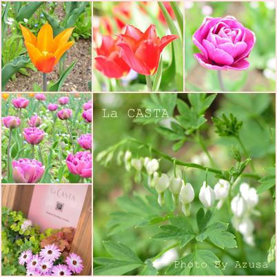 庭園のお花2.jpg