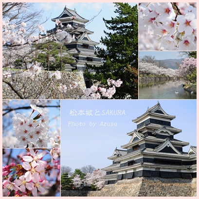 松本城の桜.jpg