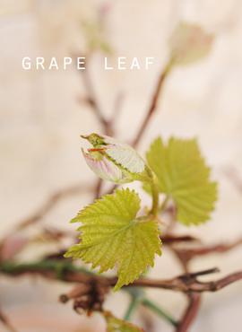 葡萄の葉っぱ.jpg