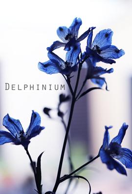 デルフィニウム②.jpg