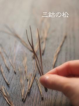 三鈷の松.jpg