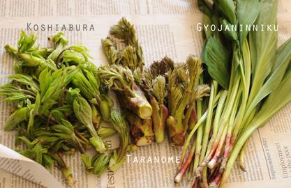 山菜いっぱい.jpg