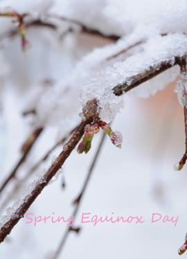 春分の日雪.jpg