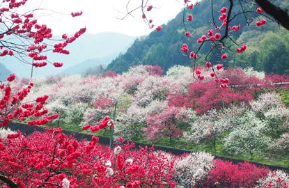 花桃④.jpg